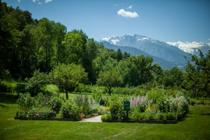 Orto-giardino Il Jardin des Anciens Remedès